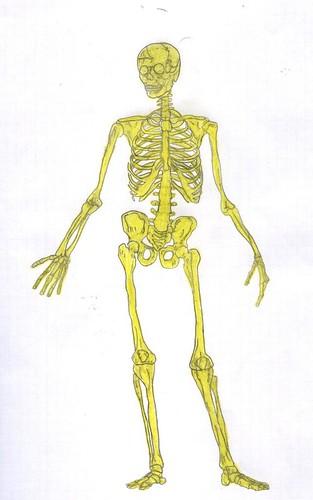 Il nostro scheletro