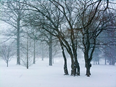 (nardell) Tags: trees winter snow snowstorm pa snowing blizzard westchester snowscenes