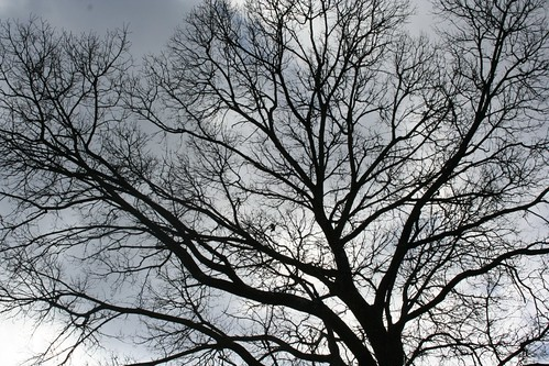 Bare oak and sky