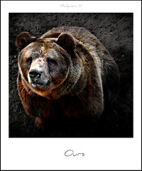 750 Ours (Nebojsa Mladjenovic) Tags: bear light france nature animal fauna digital polaroid outdoors lumix wildlife panasonic priroda ours fz50 selectivecoloring svetlost anawesomeshot mladjenovic mygearandmepremium mygearandmebronze mygearandmesilver mygearandmegold