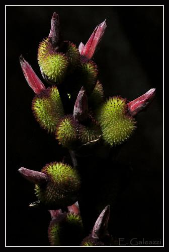 Flor desconhecida