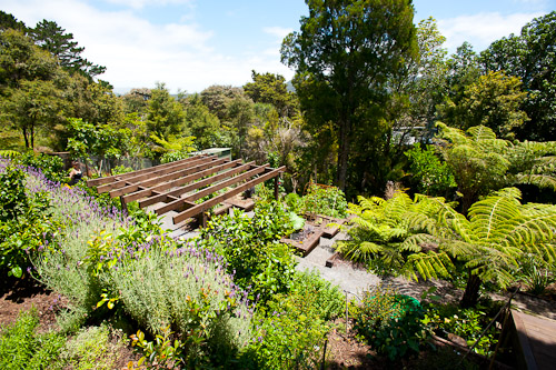 G and G's garden, Auckland, New Zealand