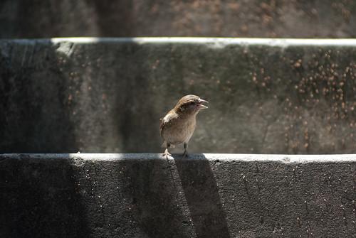 Bird on Stairs