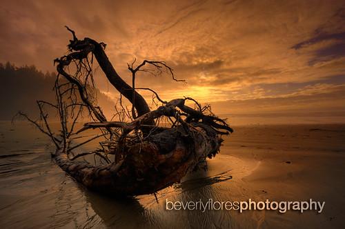 Short Sands driftwood