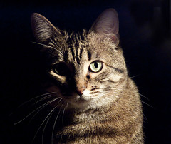 caTavaggio (Fil.ippo) Tags: pet cat kitten gatto caravaggio filippo micio blueribbonwinner topseven abigfave kittysuperstar platinumphoto impressedbeauty mygearandmegold boc0110 mygearandmeplatinum mygearandmediamond