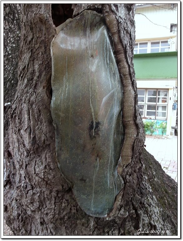 南庄老街 (24)
