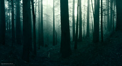 the woods (Simon Christen - iseemooi) Tags: trees green fog forest dark scary woods foggy creepy mttam redwood tam 5photosaday