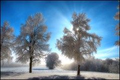 nice winterday (klaus72) Tags: winter sun mist snow fog shadows wintertime sunrays abigfave platinumheartaward quarzoespecial micarttttworldphotographyawards micartttt platinumbestshot michaelchee
