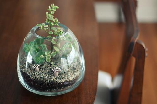 a desert terrarium