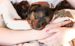Sleepy puppies 5 weeks
