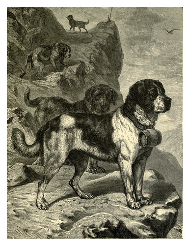 010a-San Bernardos-The illustrated book of the dog 1881- Vero Kemball Shaw