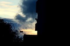 Curitiba - Cachorro (Will Martin) Tags: sol canon is do sombra cachorro 1855mm por barigui 500d 13556 t1i