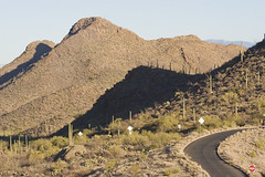 Saguaro20 (patcaribou) Tags: arizona tucson saguaro saguaronationalpark