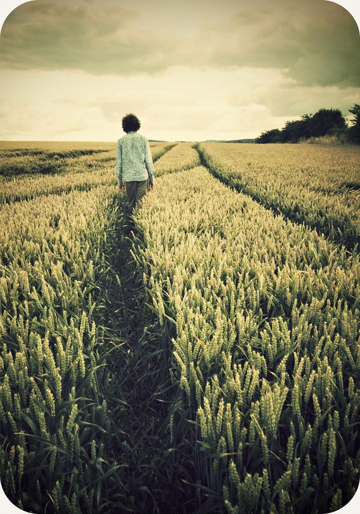 field dreamer
