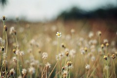 Painting Nature (khaniv13) Tags: flowers wild film grass analog bush shrub nikonfe 50mmf18seriese dnpcenturia200 khaniv13