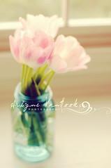Good Morning  {Explore} (Arlyne VanHook Photography) Tags: pink light window 50mm nikon tulips mason jar d300s