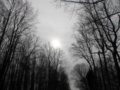winter wonderland 2 blog