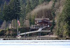 A Columbia River home (Team Hymas) Tags: birds river washington flag columbia american migratory duane