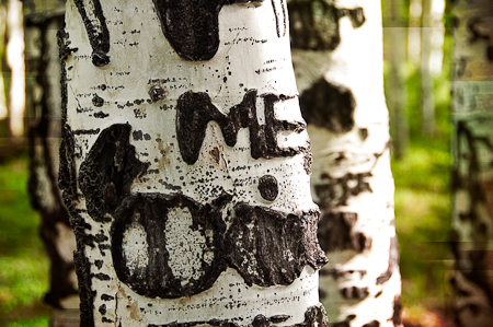 Trees-3
