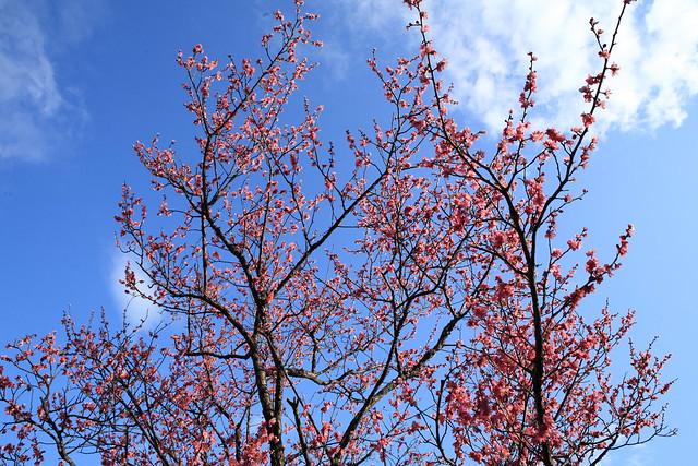 青空に映える花