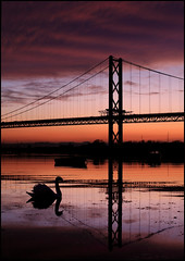 *#&%$#* Swan (angus clyne) Tags: road bridge sunset two dog black reflection broken boats scotland boat swan suspension fife bridges calm forth swans goaway finn firth shoo firthofforth flikcr colorphotoaward