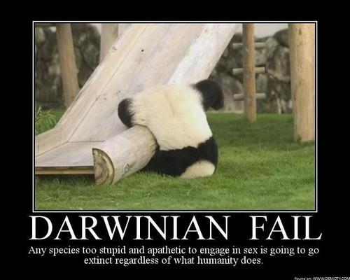 Darwinian-Fail-Panda