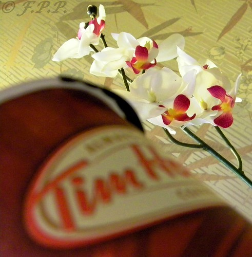 Timmies and Hawaiian Orchid