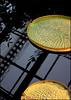 Victoria Seerose (Prinz Wilbert) Tags: plant plante germany deutschland europa europe pflanze kiel vegetal schleswigholstein holstein pianta brd norddeutschland northgermany mitteleuropa roślina frg растение
