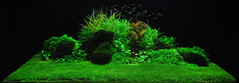 After the Thunderstorm (Extraplant) Tags: aquarium contest aquascape