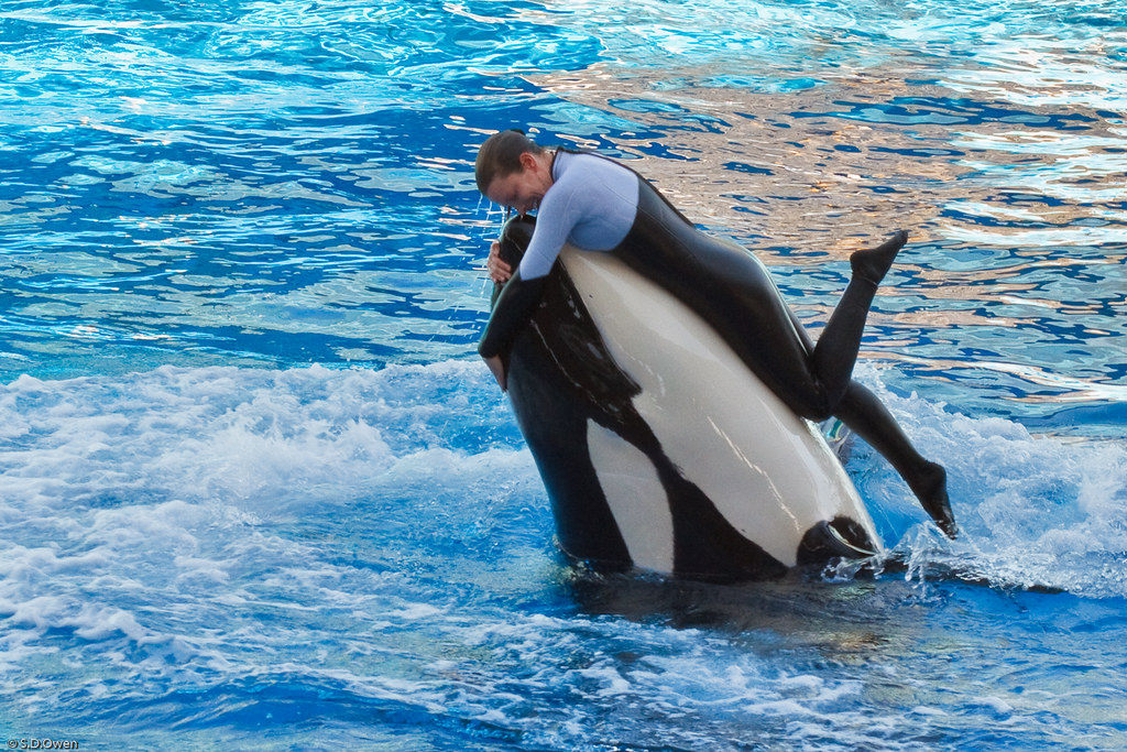 The World's most recently posted photos of blackfish and