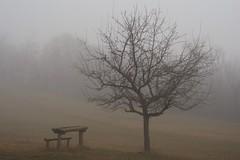 foggy Gazi Baba (kosova cajun) Tags: winter fog landscape macedonia february zima baretree picnictable skopje makedonija dimr peisazh shkupi shkup  maqedonia mjegull   gazibabaforestpark