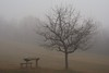 foggy Gazi Baba (kosova cajun) Tags: winter fog landscape macedonia february zima baretree picnictable skopje makedonija dimër peisazh shkupi shkup македонија maqedonia mjegull скопје паркшуматагазибаба gazibabaforestpark