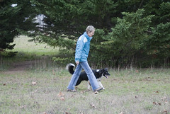 _DSC4439 (SNAKY34) Tags: dog chien animal cane photography photo education nikon canine perro hund ami agility bordercollie animaux compagnie laurence berger ducation dressage cachou compagnon islandais metayer readerphoto snaky34 laurencemetayer