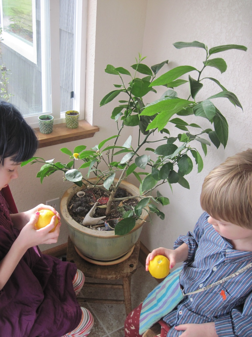 Kids Contemplate Lemonage