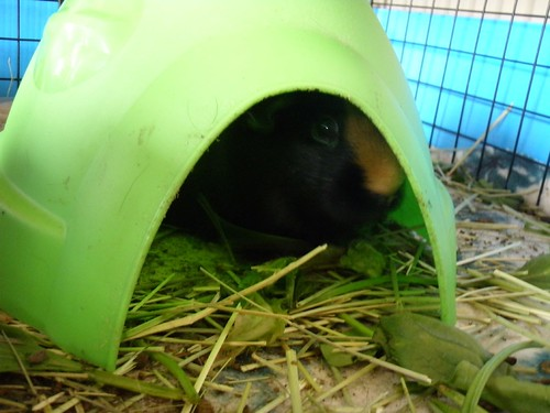 not coming out of her contraceptive igloo