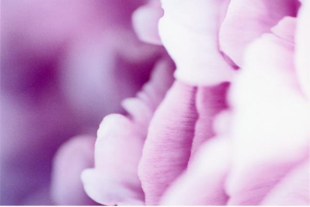 Ruffle of flower