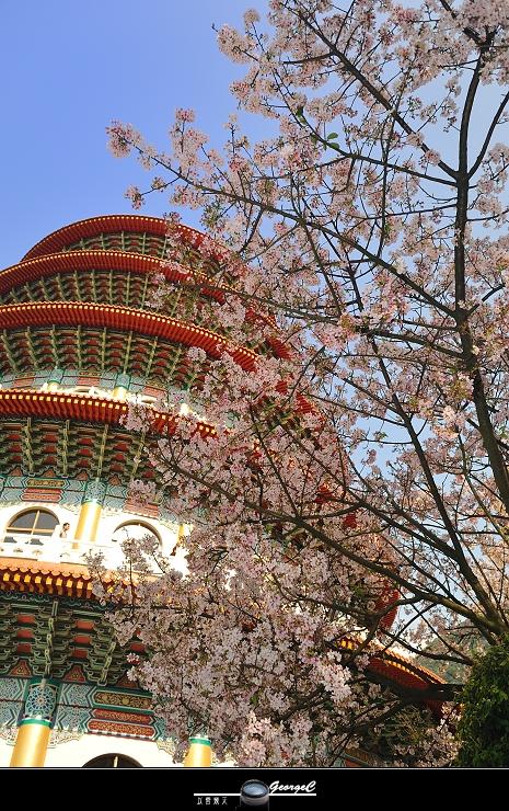 Sakura sunny 16