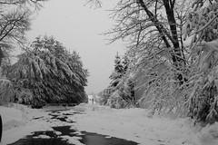 Narnia? (playmyuke94) Tags: winter canonxsrebel