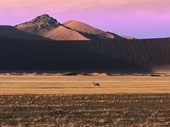 Orix (blasaure) Tags: desert dunes namibia sossusvlei orix blasaure desertdunes colorphotoaward namibiasossusvlei top20travelpix namibiaorix