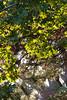 Blackheath morning-3191946 (Alan Popely) Tags: landscapes blackheath bluemountains govettsleap dpsgreen