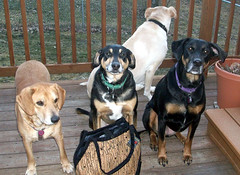4Dogs_TBihnBag_31710d