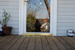 My reflection and cat through the door (queenofthemoodswingset2) Tags: reflection cat frontporch