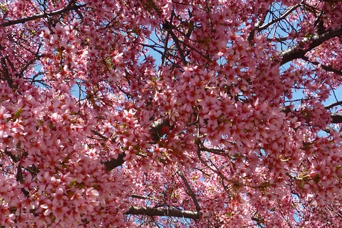 Spring wonder