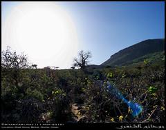 A Baobab in Wadi Hinna, Dhofar (Shanfari.net) Tags: trees summer tree nature lumix raw natural panasonic malvaceae oman wadi fz mountian zufar digitata rw2 salalah hinna  sultanate dhofar  khareef     mirbat adansonia    adansoniadigitata       governate  dofar fz38 marbat  fz35 dmcfz35  qaith