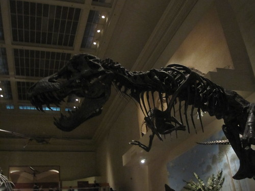 T-Rex at National museum of Natural History