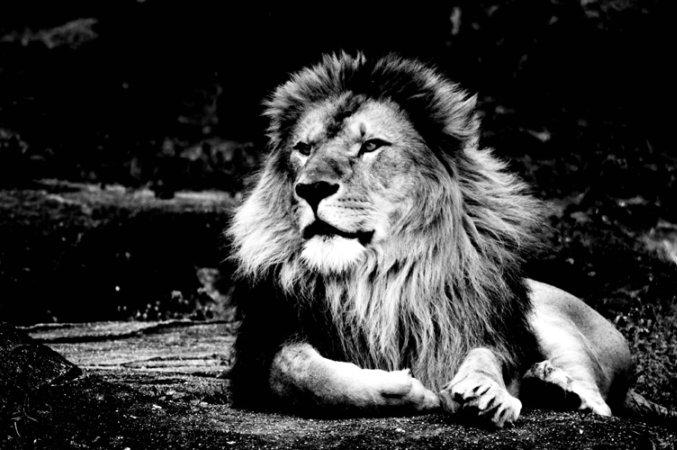 2010/04/04 lion