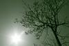 Green Tree (IdahoA1C) Tags: sun tree canon greentint 450d