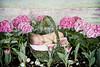 (Heidi Hope) Tags: pink sleeping baby flower girl garden easter spring basket newborn eggs heidihopephotography heidihope httpwwwheidihopecom httpwwwheidihopeblogspotcom