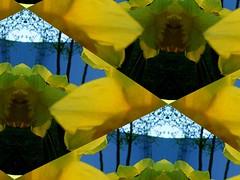 Glockendurchsicht. (Dieter14 u.Anjalie157) Tags: collagen osterglocken gelbblau bastelstunde kaleidospheres kaleifractals