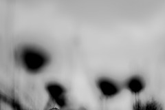 love this (Michel DA SILVA) Tags: france canon lens rebel 50mm europa europe pentax burgundy bourgogne francia xsi 89 yonne joigny pentaxlens 450d smcpm50mmf17 rebelxsi kissx2 canoneos450 micheldasilva wwwdasilvamichelcom smcpentaxasahi